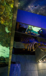 Aquarium, nature photography, baltimore, panorama, abstract photography, underwater