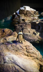 New England Aquarium, Boston Aquarium,