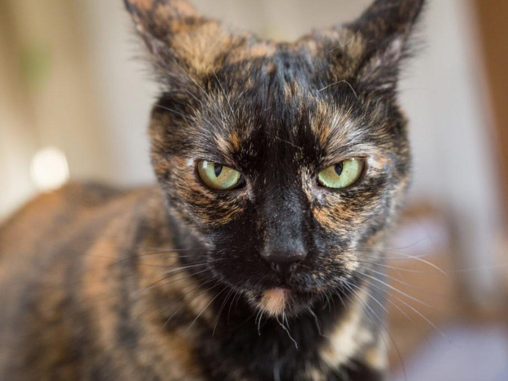 Maddie's Kitty Portraits-55