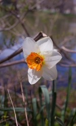 Nature Photography, Natural Light Photography, Spring Photography