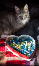 Valentine's Day Photography, Pet Photography, Natural Light, Cat Photography