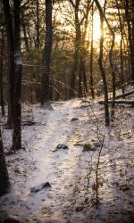 60mm lens, macro photography, Middlesex Fells, nature photography, sunset photography