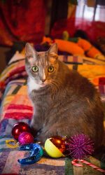 Pet Photography, cat photography, dog photography, Leah C-S Photography, Holiday Pet Photography