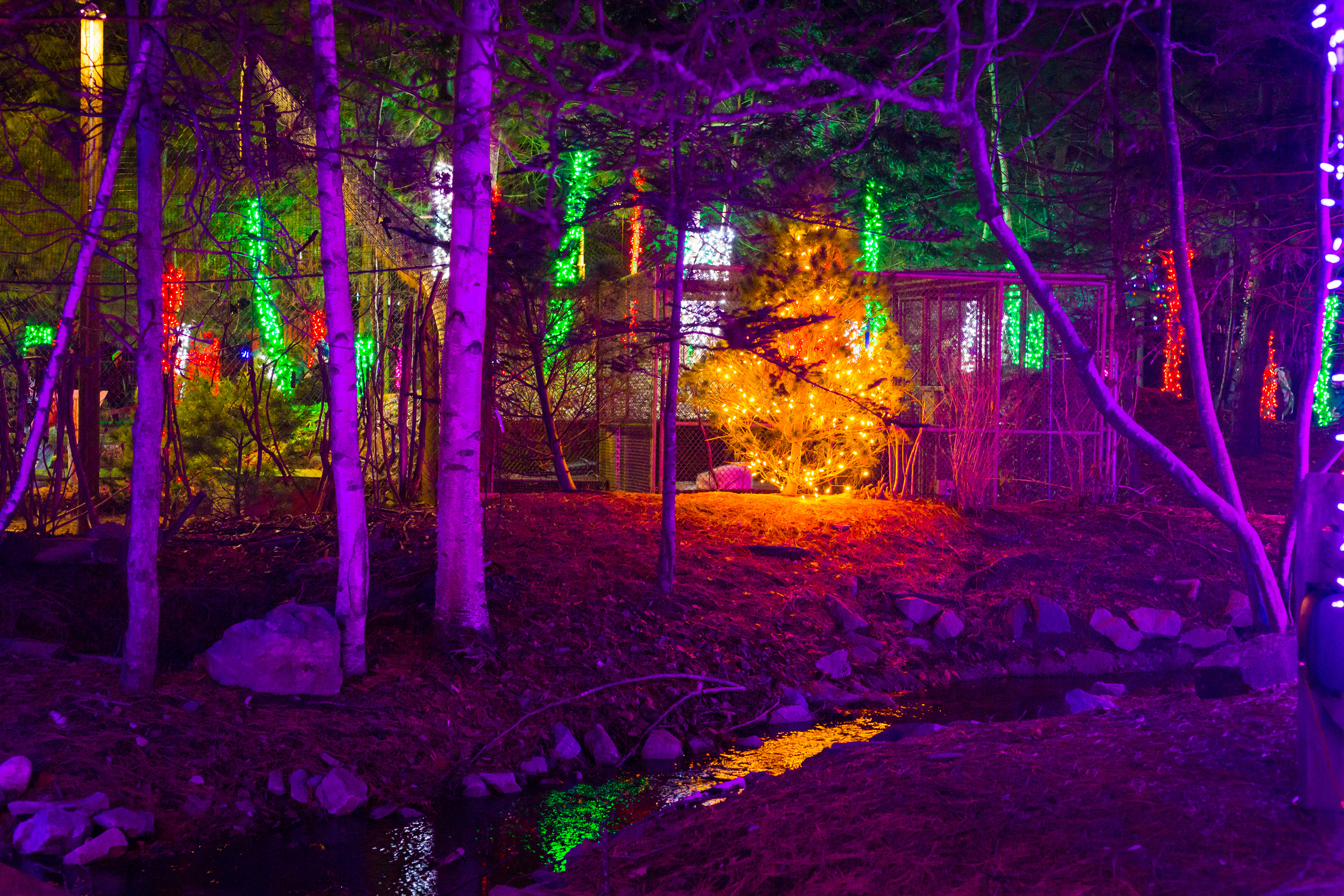 Zoo Lights at the Stone Zoo