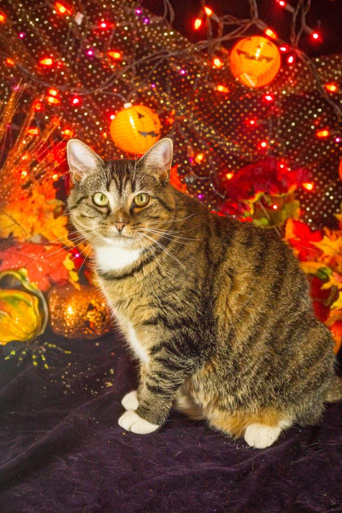 Halloween Kitties 2020