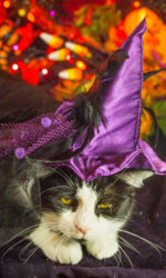 Halloween Kitty Photos 2020-16