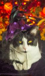 Halloween Kitty Photos 2020-18