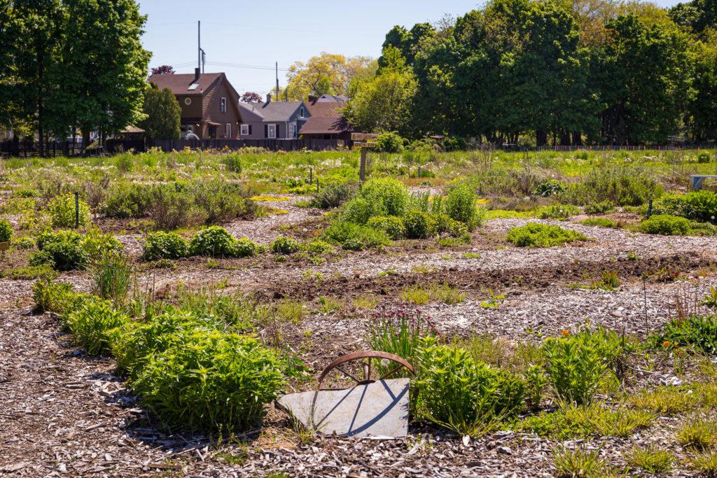 Newhall Fields Community Farm