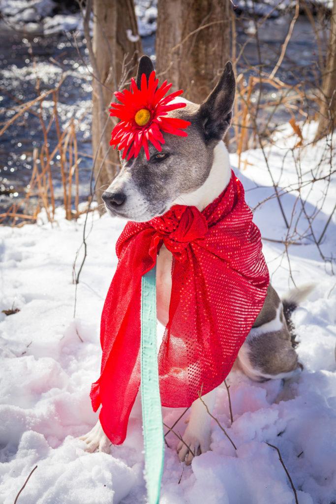 Prints the Valentine's Dog
