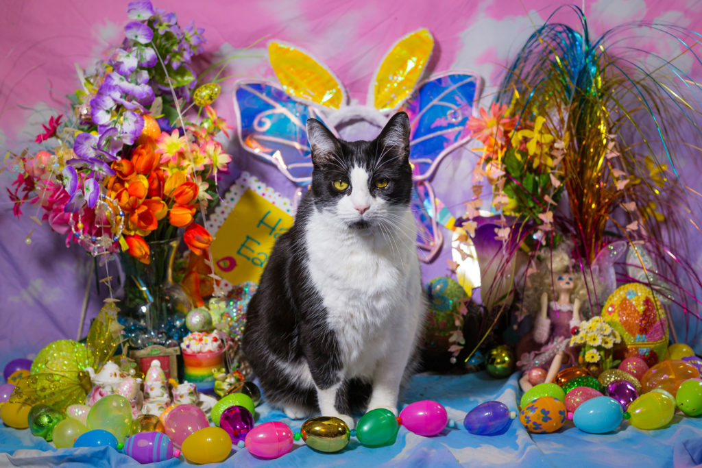 Easter Kitties Pet Session!